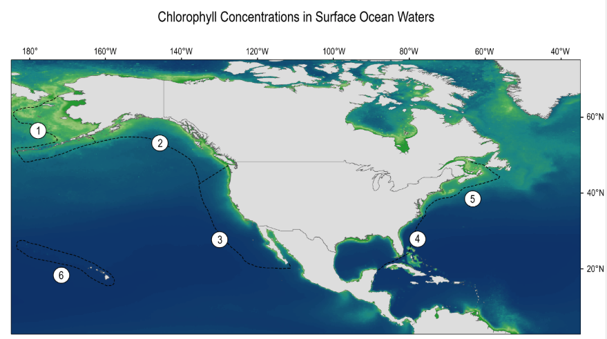 Ocean Chlorophyll Concentrations