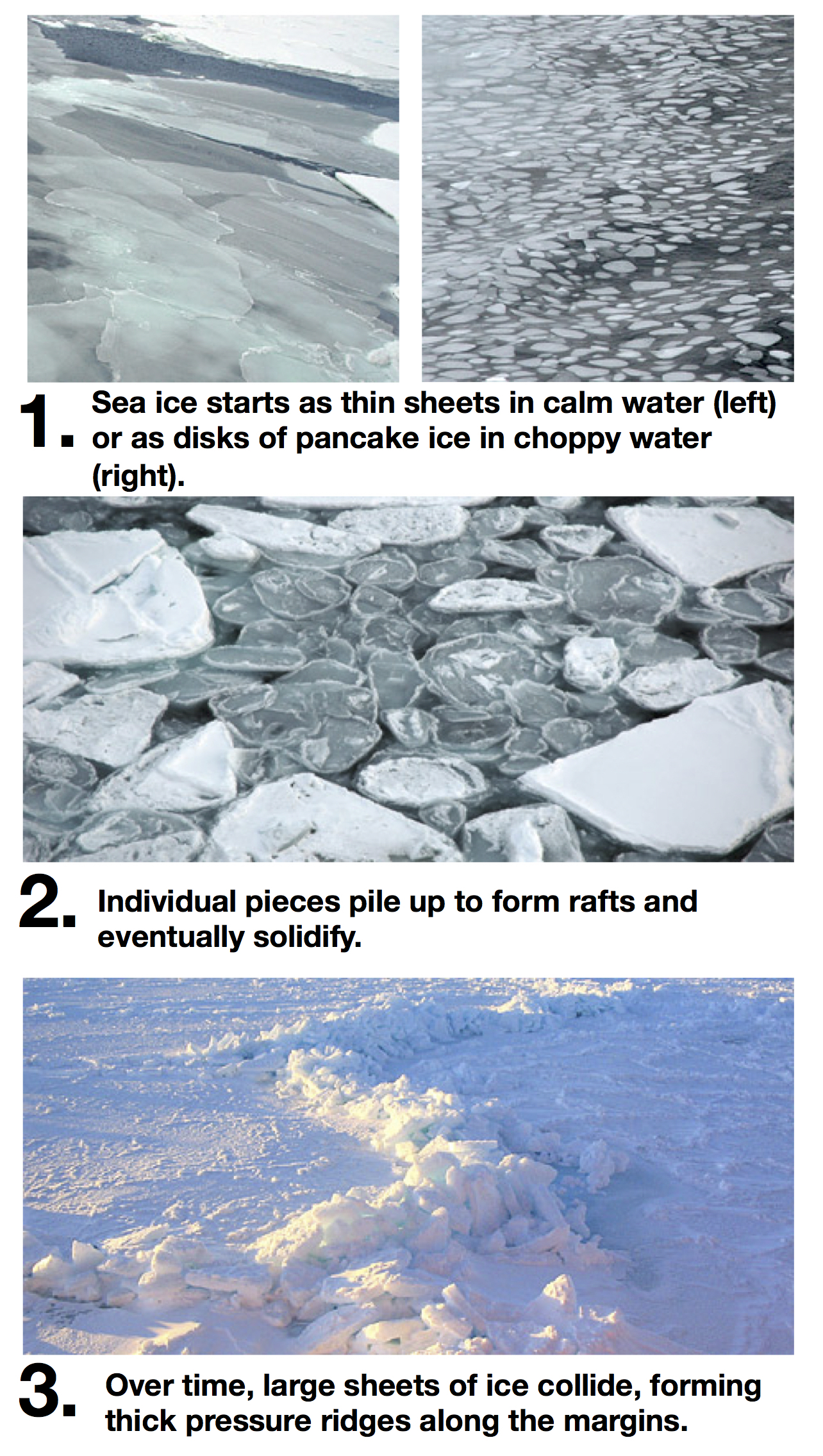Sea ice has a life cycle of its own.