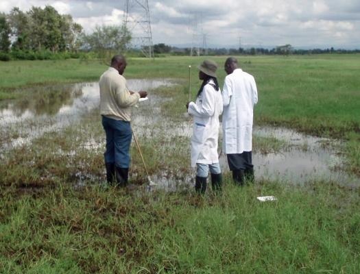 Scientists study a typical dambo habitat at Sukari Farm, a long-term Rift Valley Fever study site just outside Nairobi, Kenya.