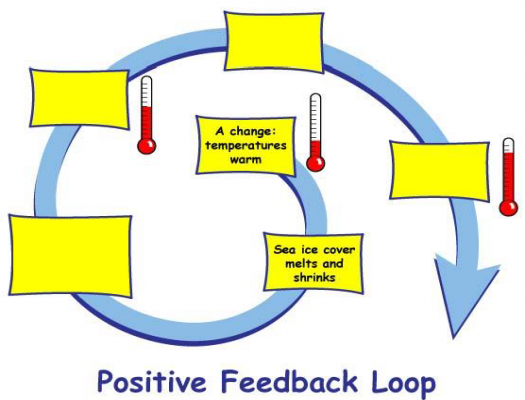 Positive Feedback Loop - Image modified from https://climatekids.nasa.gov/arctic-animals/